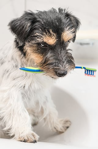 Dog Dental Care in Greenfield, WI: Dog in a sink holding a toothbrush