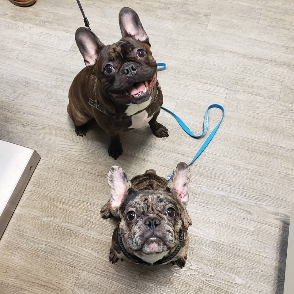 Two dogs looking up: Photo Gallery in Greenfield